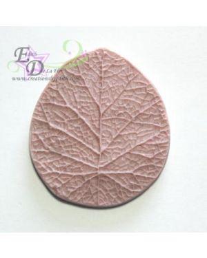 Anemone /violet veiner